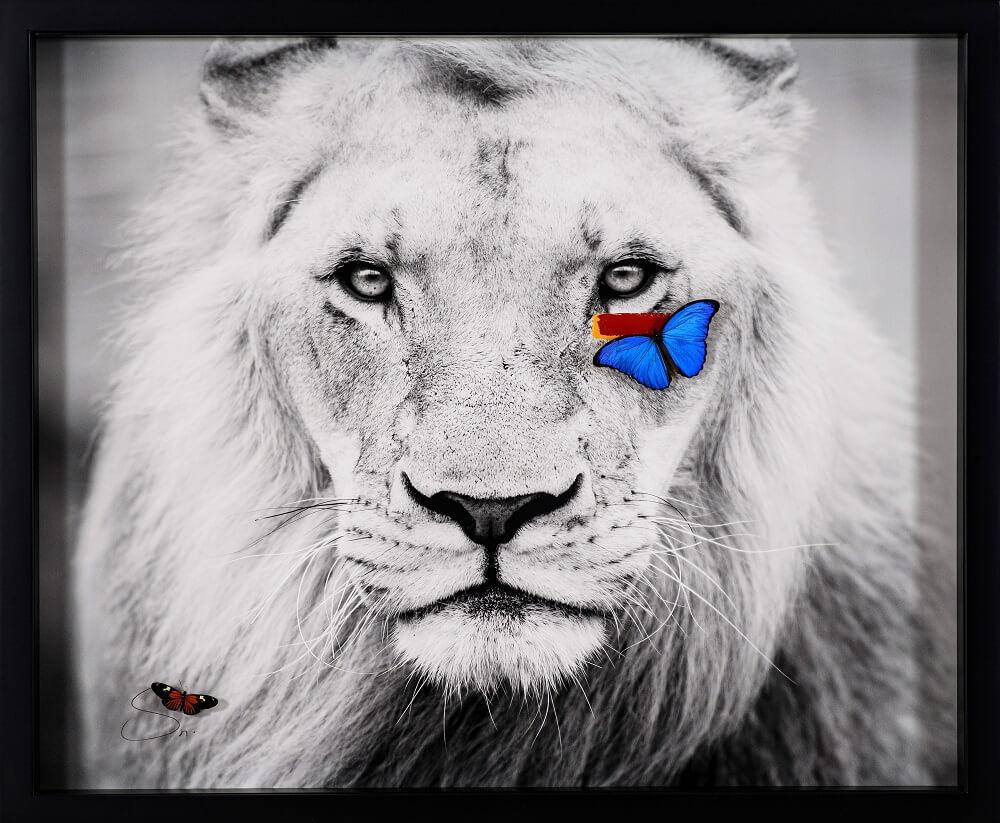 Lion (M) - SN - Eden Gallery