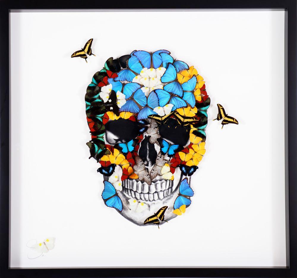Butterfly Skull - SN - Eden Gallery