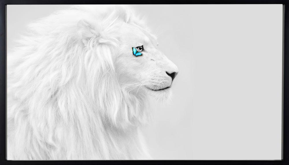 White Lion  - SN - Eden Gallery